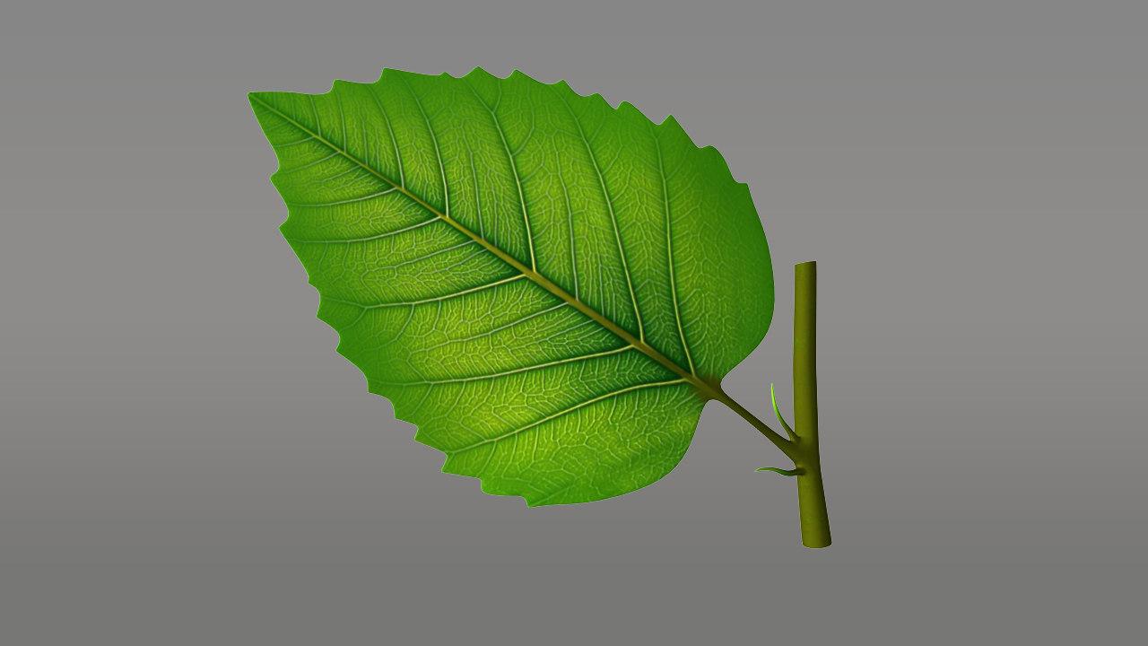 ma lathyrus flowering plant