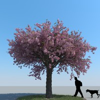 max realistic cherry tree
