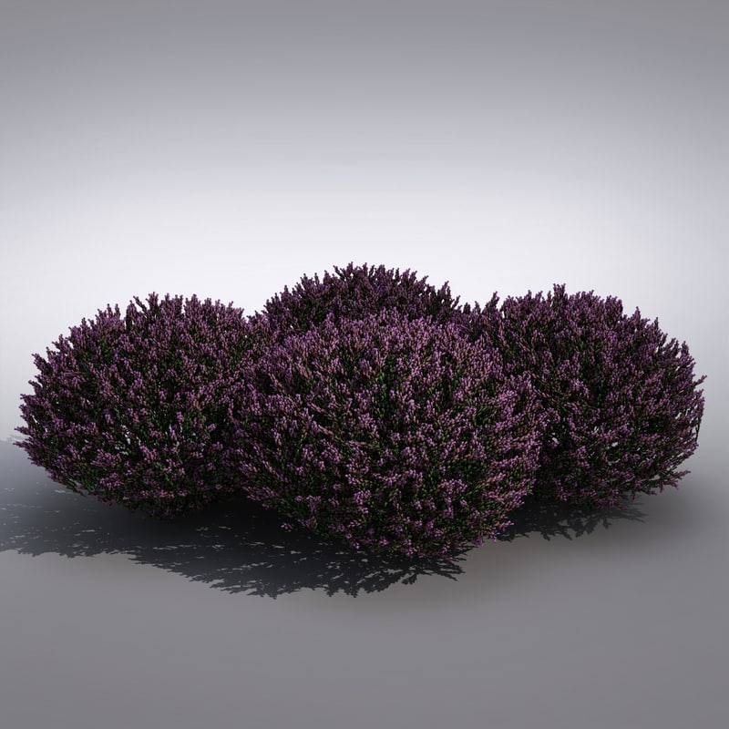 3d realistic lavender flower model
