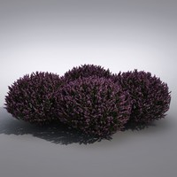 3d realistic lavender flower model