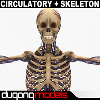 Human Circulatory & Skeleton System