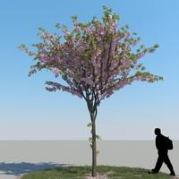 cherry tree 3d model