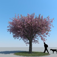 3d max realistic cherry tree