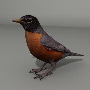 3d robin model