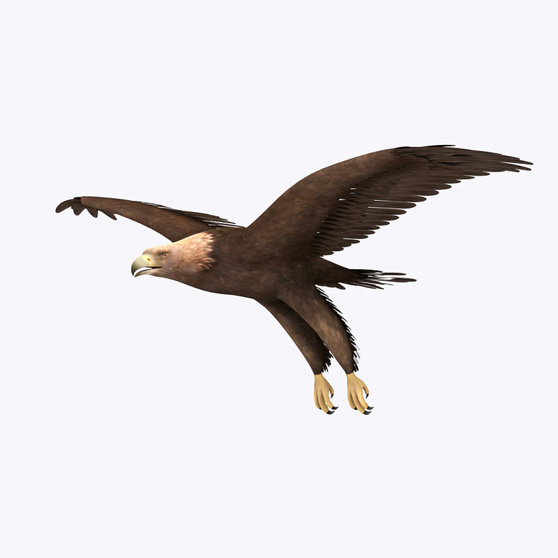3d eagle models turbosquid
