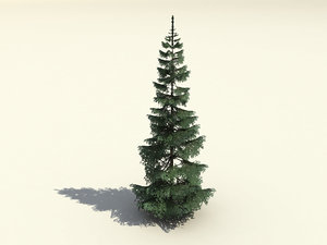 free fir branches trunk 3d model