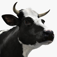 Holstein Cow (with Fur)