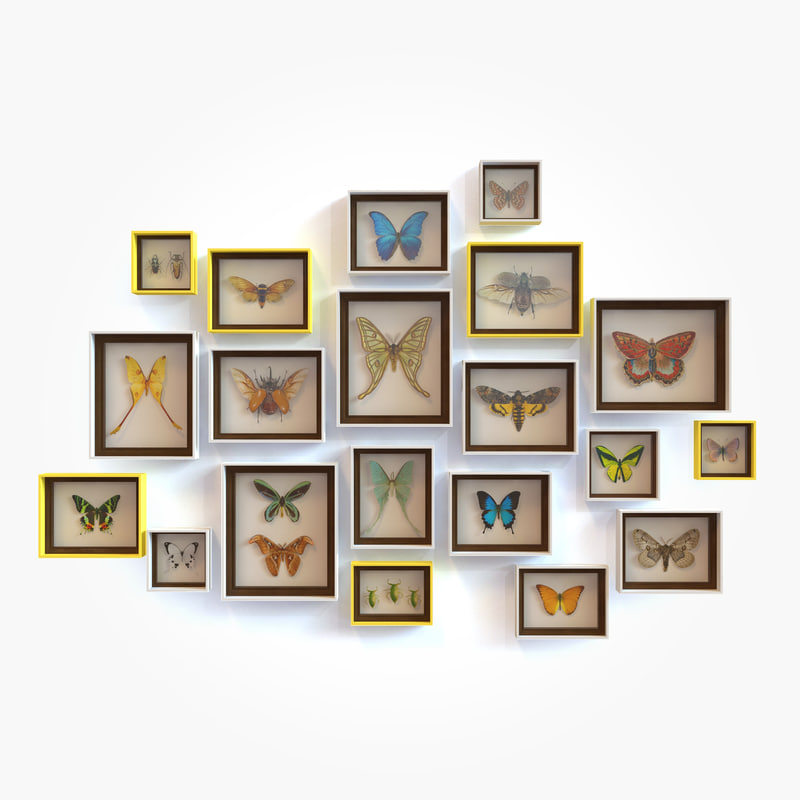 framed butterfly 3d 3ds