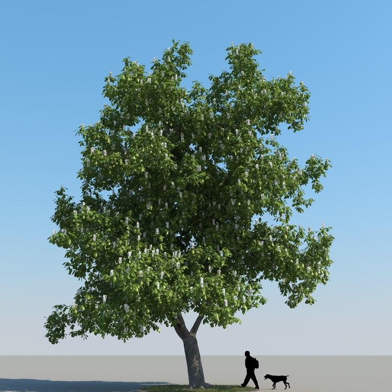 max realistic chestnut tree leaf