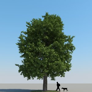 max realistic chestnut tree leaf