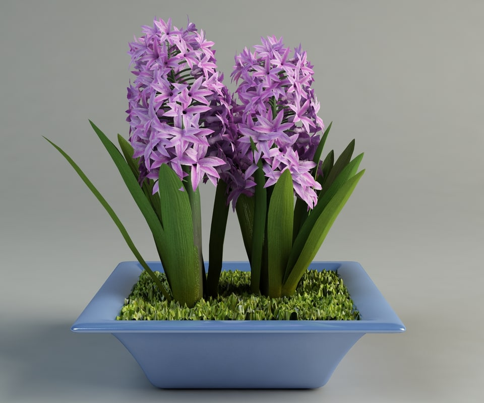 hyacinth pot 3d model