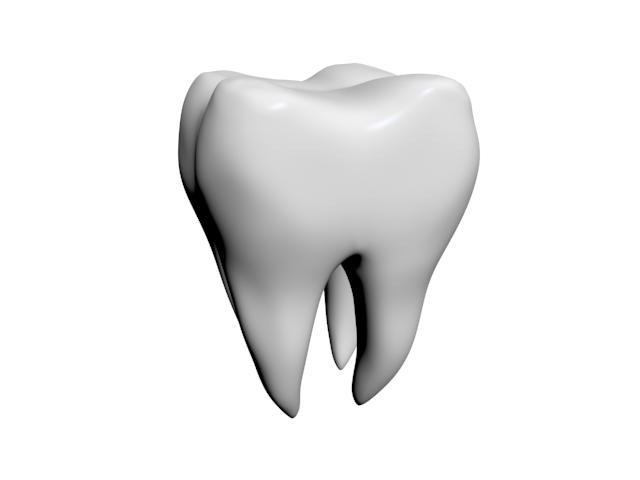 free tooth roots 3d model