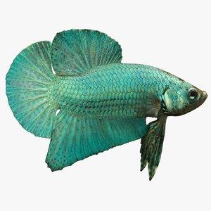 siamese fish betta 3d fbx