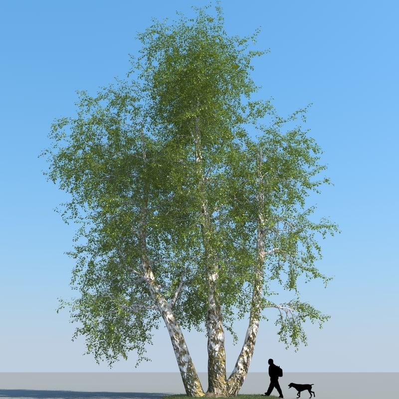 obj realistic birch tree