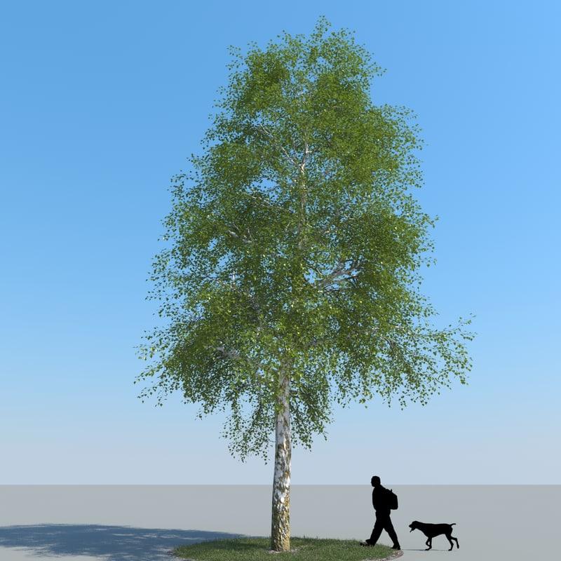 3d model of realistic birch tree