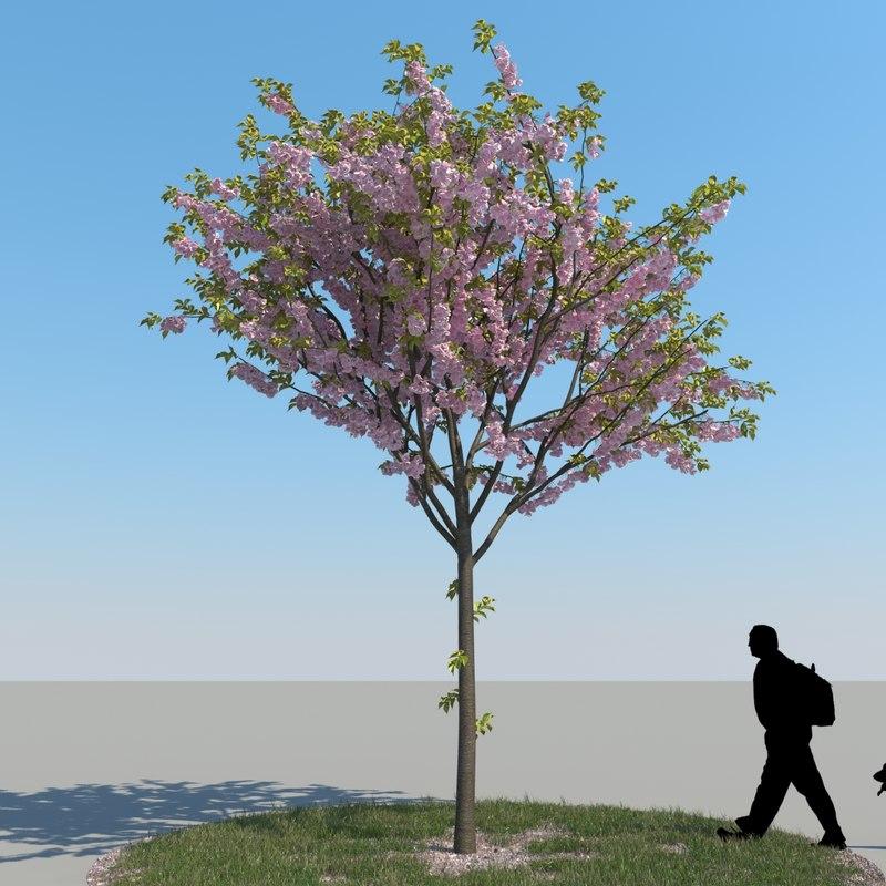3d realistic cherry tree