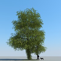 3ds max realistic linden tree leaf