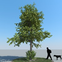realistic linden tree leaf 3d model