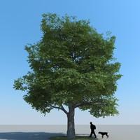 Maple Tree Type 12