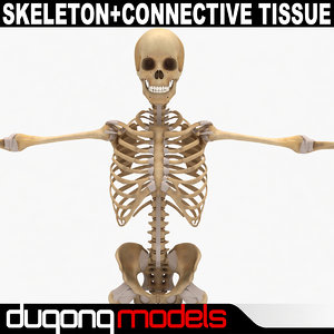 max dugm01 human skeleton connective