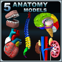 Human Anatomy Collection