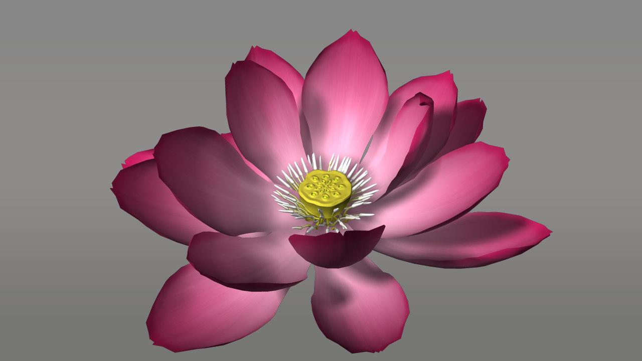 nelumbo plants flowers 3d model