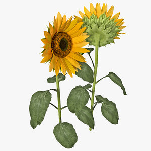 3ds max sunflower 2