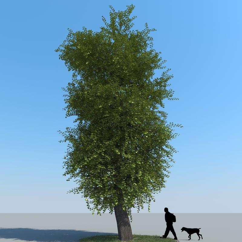 x realistic linden tree leaf