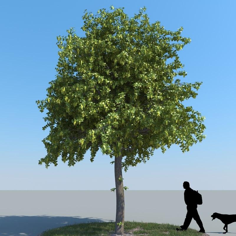 3d realistic linden tree leaf model