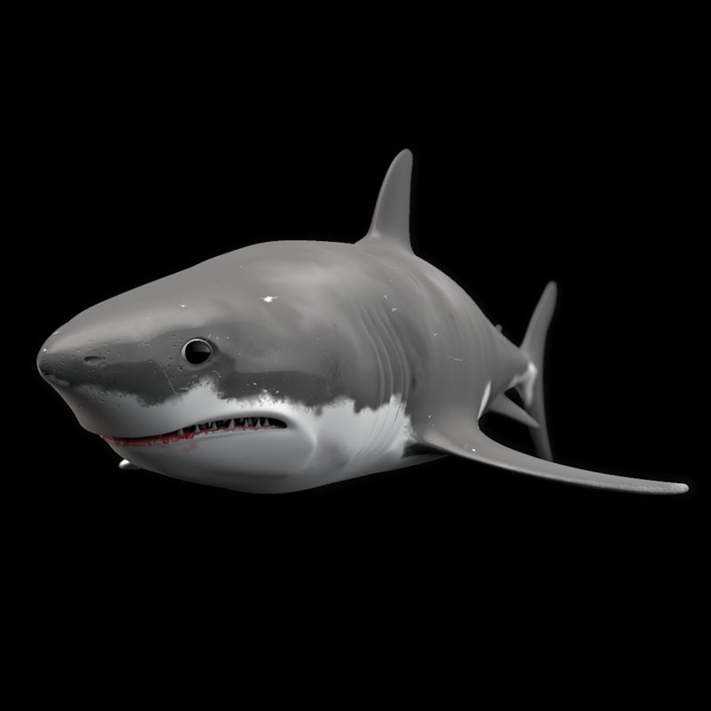shark animation 3d model