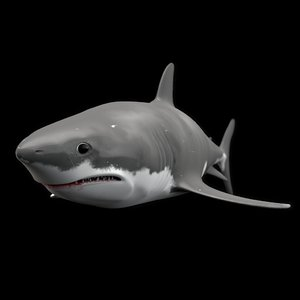 shark animation 3d model
