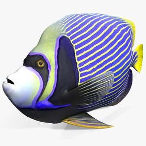 3d model angelfish fish