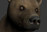 animal bear max