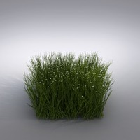 3d max ornamental grass