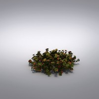 3d model small shrub