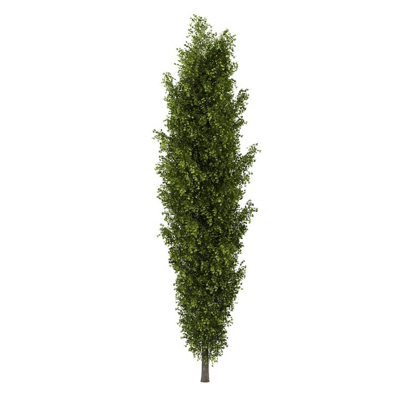 poplar populus 3d ma