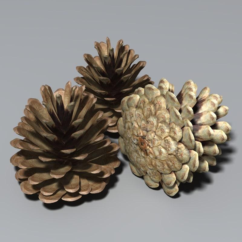 cone conifer seeds max