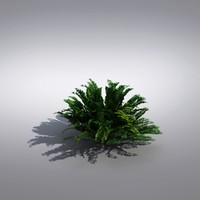 3d realistic plants bush