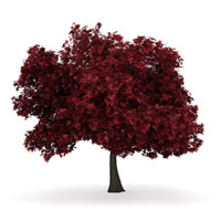 3d red maple acer