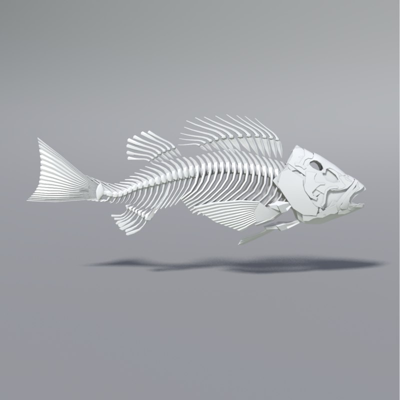 max fish skeleton