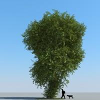 realistic linden tree leaf 3d max