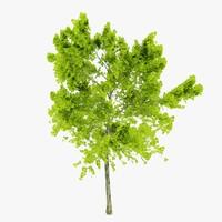 3d model tree 1