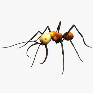 3d army ant insect