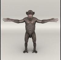 lwo chimp chimpanzee