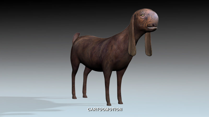 syrian goat 3d model