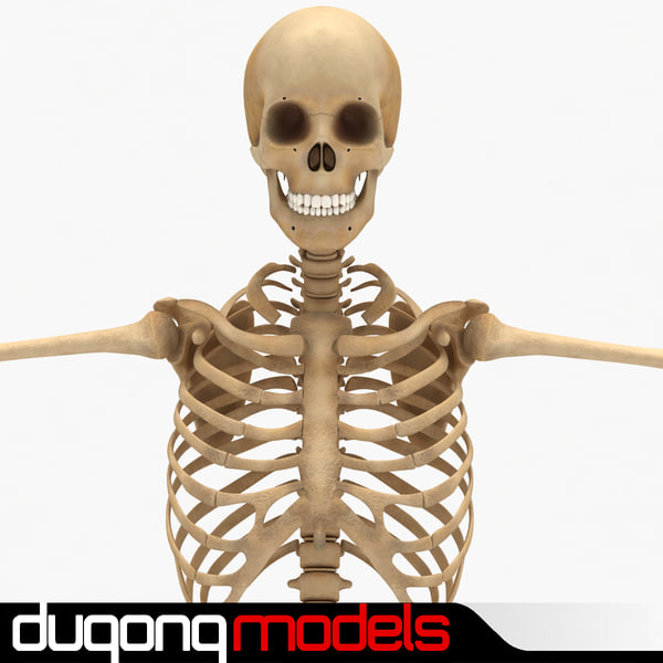 dugm01 human skeleton 3d 3ds