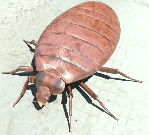 3d model bedbug mentalray