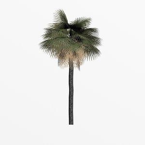 washingtonia palm 3d 3ds
