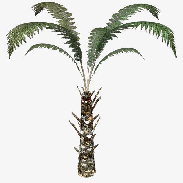 3d model of tree fern