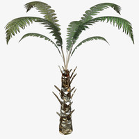 3d model of tree fern